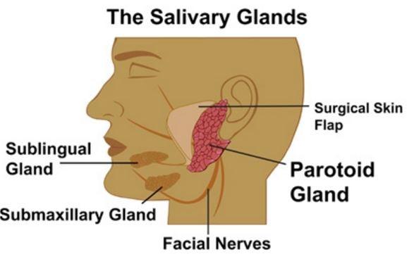 salivary gland infections